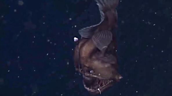 monstruo mar