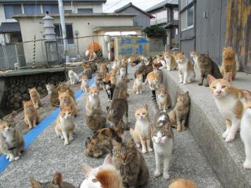 Tashirojima, la isla de los gatos